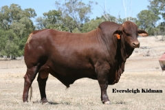 Lot 103 Eversleigh Kidman (P) D3