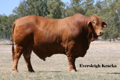 Lot 104 Eversleigh Kracka (P) D5