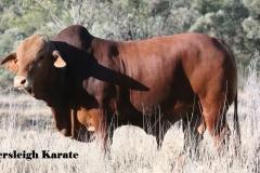 Lot 105 Eversleigh Karate 457 (P) D4