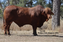 Lot-59-Wallace-Vale-Jalapeno-PP