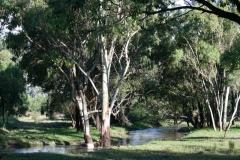 Barton's Creek