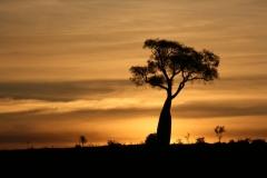 Bottletree sunset - Mountain Pdk