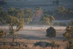 Fog along the creek - July 2016