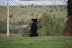 Mollie enjoying the view.