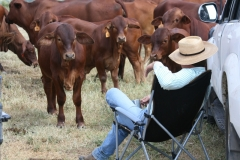 How to do a cattle inspection